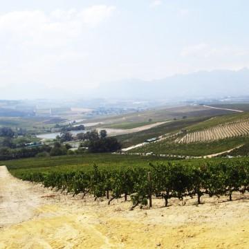Stellenboschi veiniaiad (Vuurberg)_1200