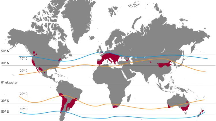 Maailma veinitootmispiirkonnad.
